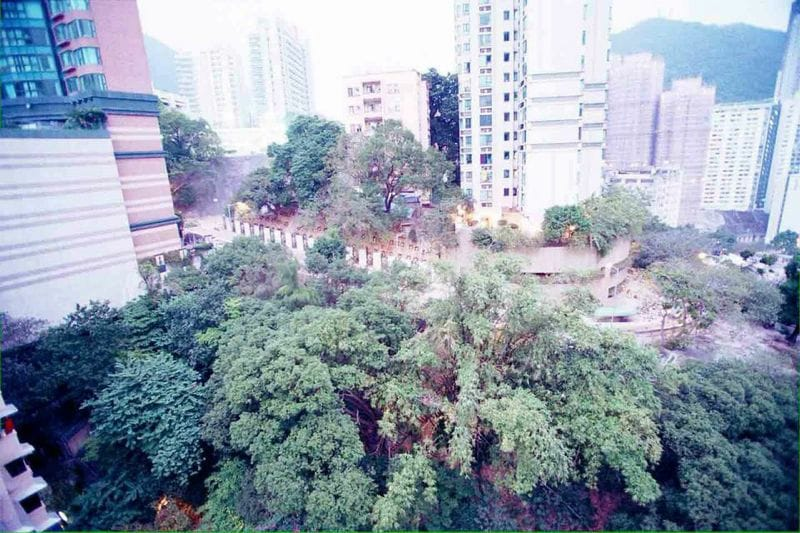 Oasis in Kennedy town