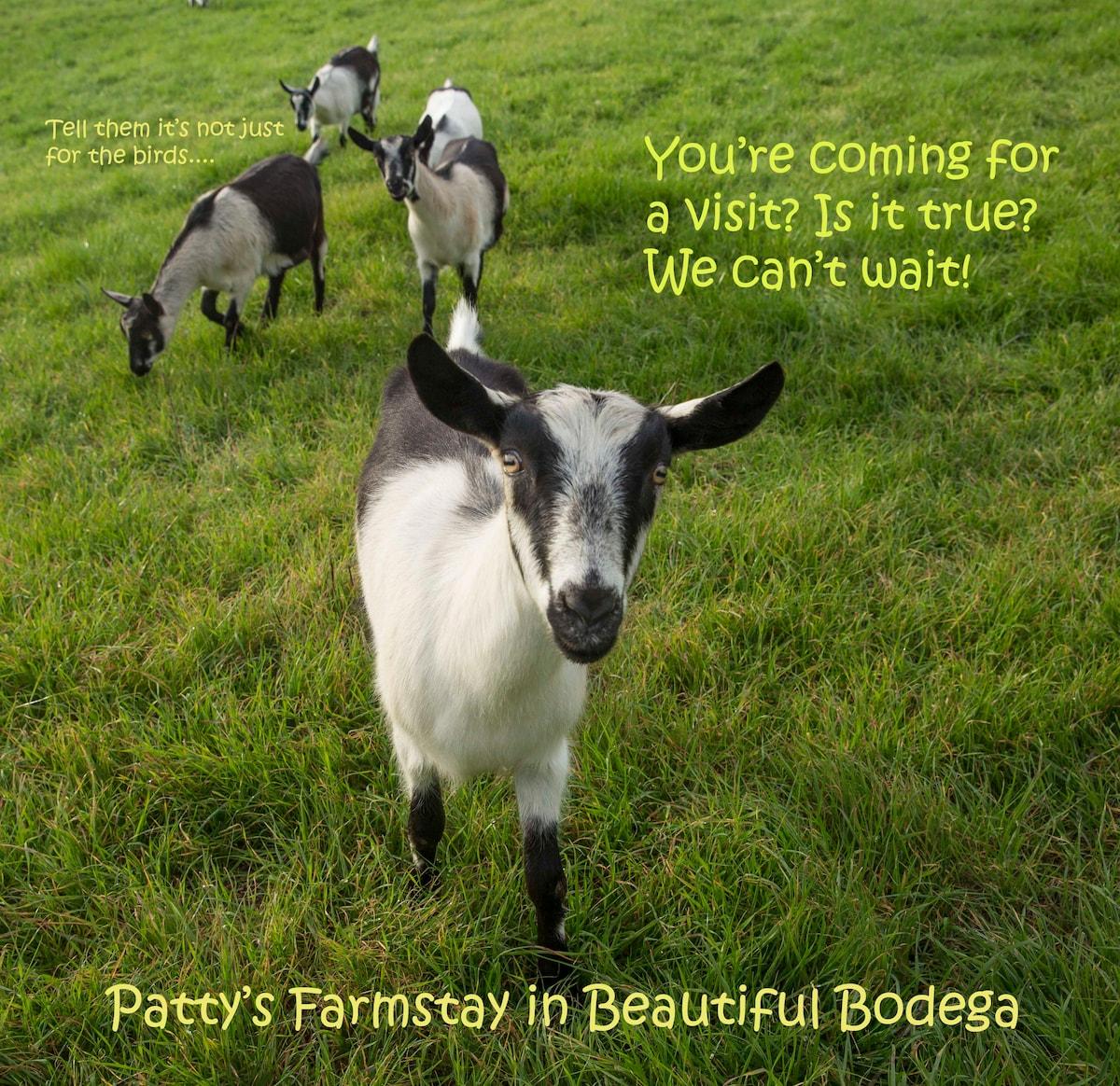Patty's Farm Stay