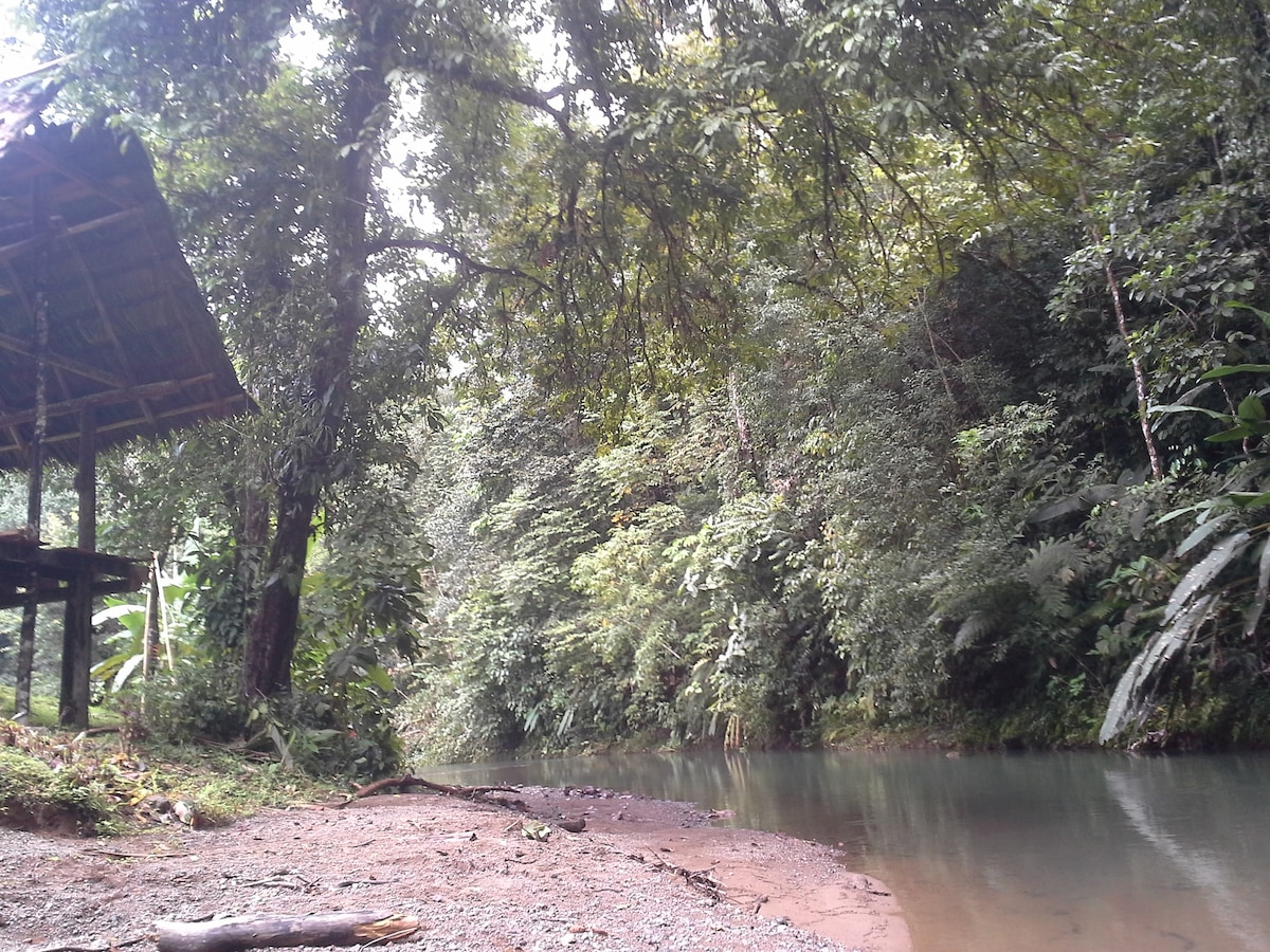 Tamandua Biological Station