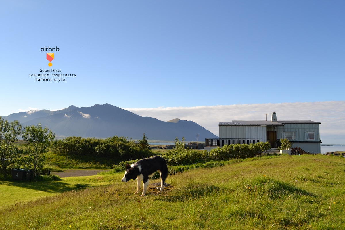 Icelands beachside farm experience.