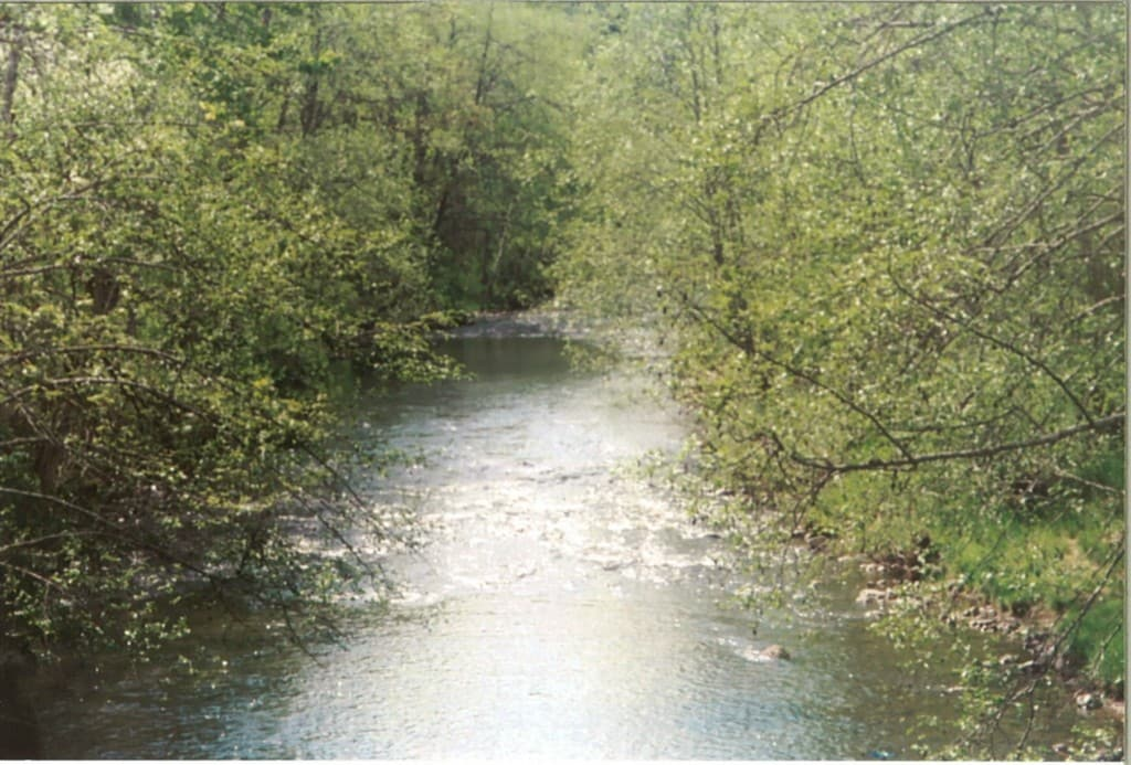 Whistling Woods on a River