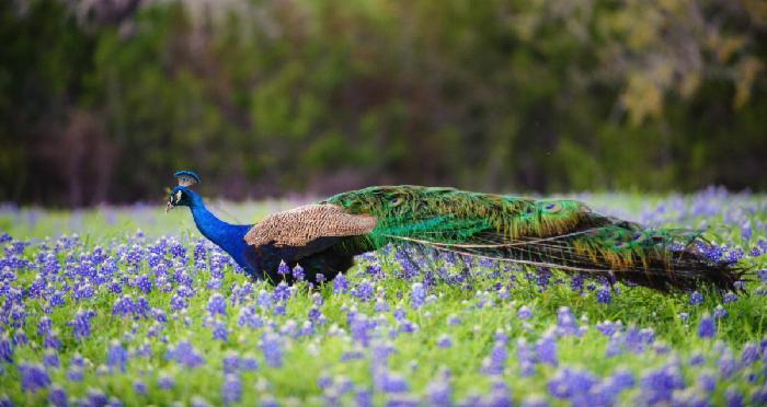 Peacock Cabins, Surprise Cabin