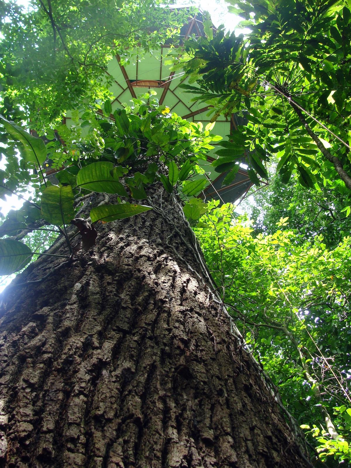 Tree house Observatorio