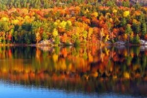 Dont miss NH's world famous foliage