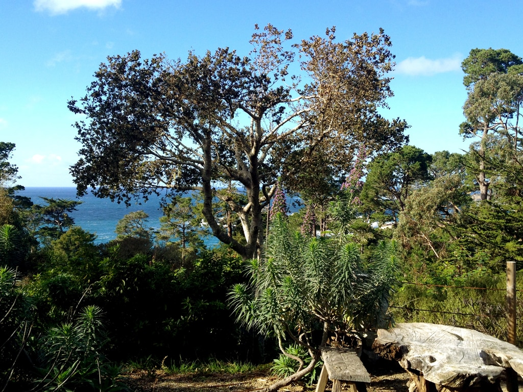 Enjoy pristine views and hear the distant bark of seals and ocean waves at Peace Cove...