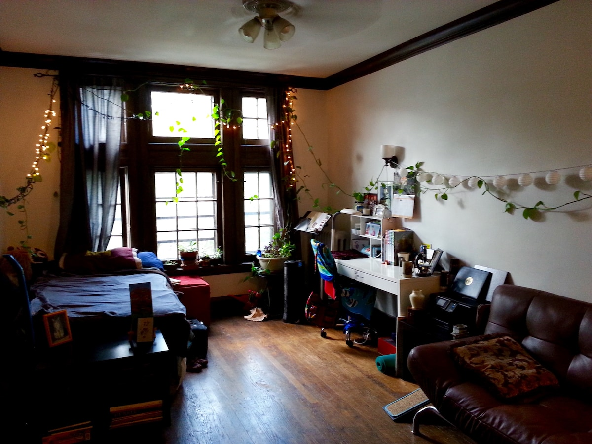 Cozy Hyde Park Studio!