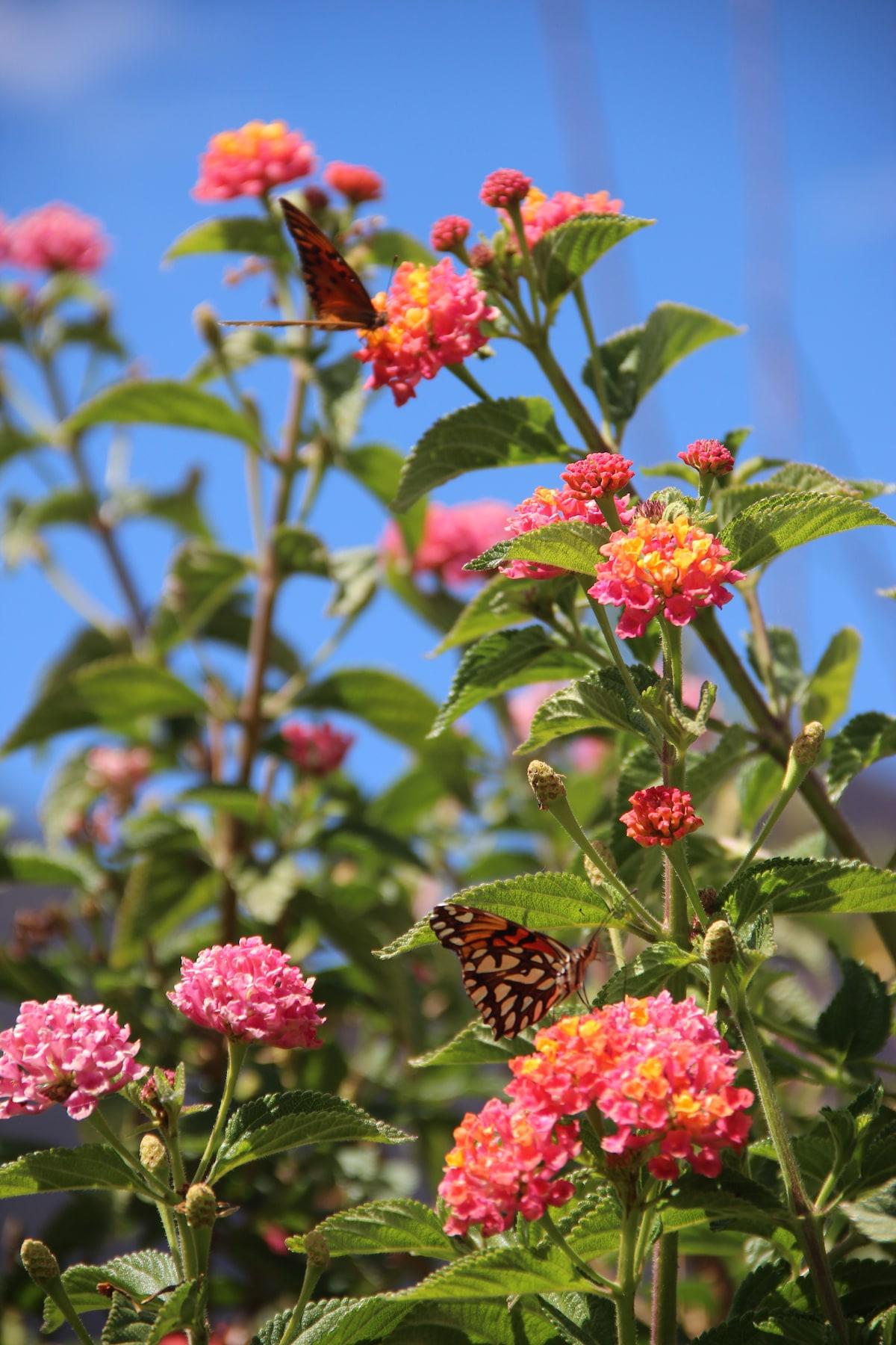 Flores en temporada de invierno