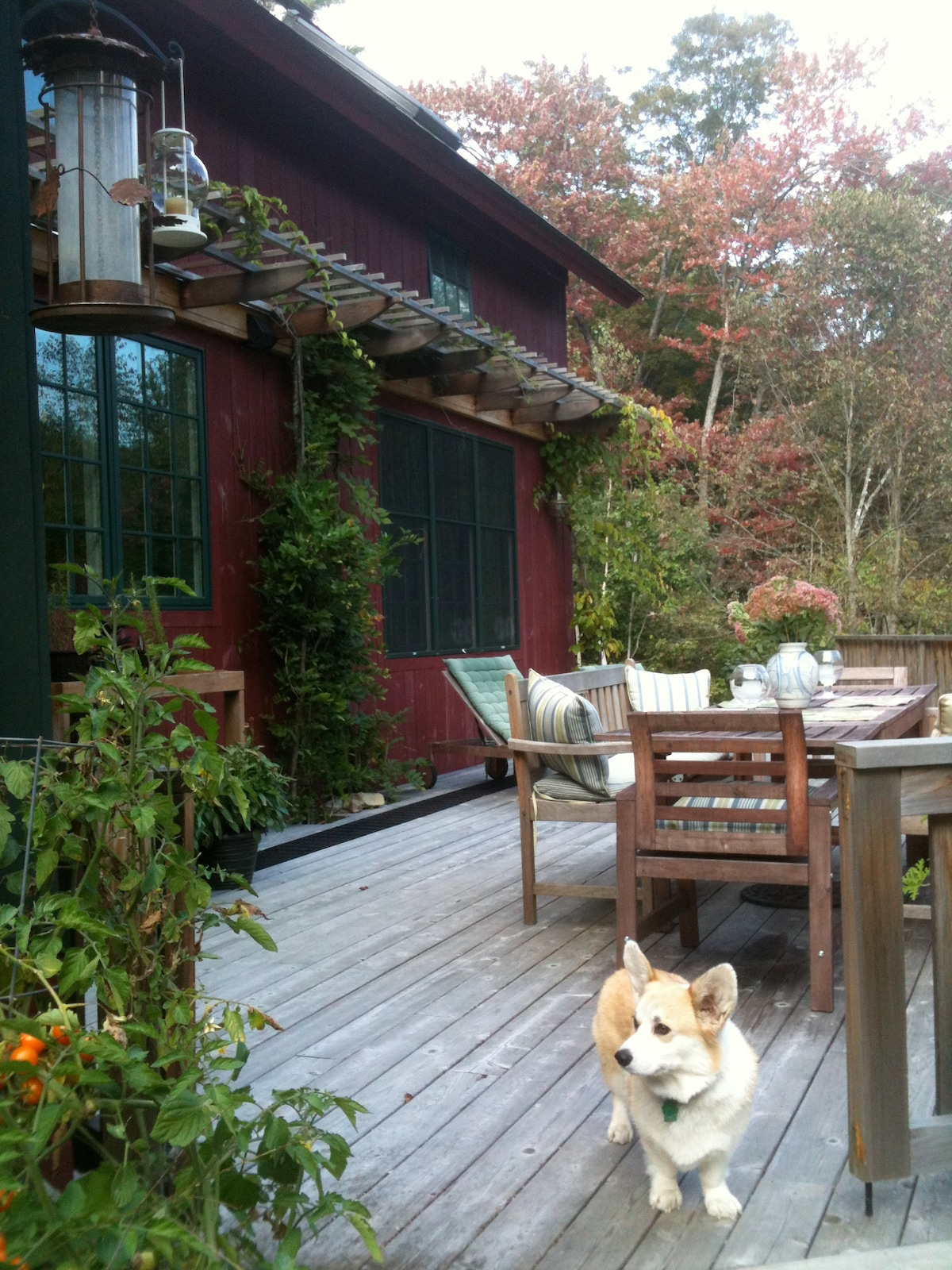 The south facing deck that overlooks a forested ravine where two streams converge.  Spacious dining, sitting, sun lounging…Finn, our friendly Corgi, loves children.