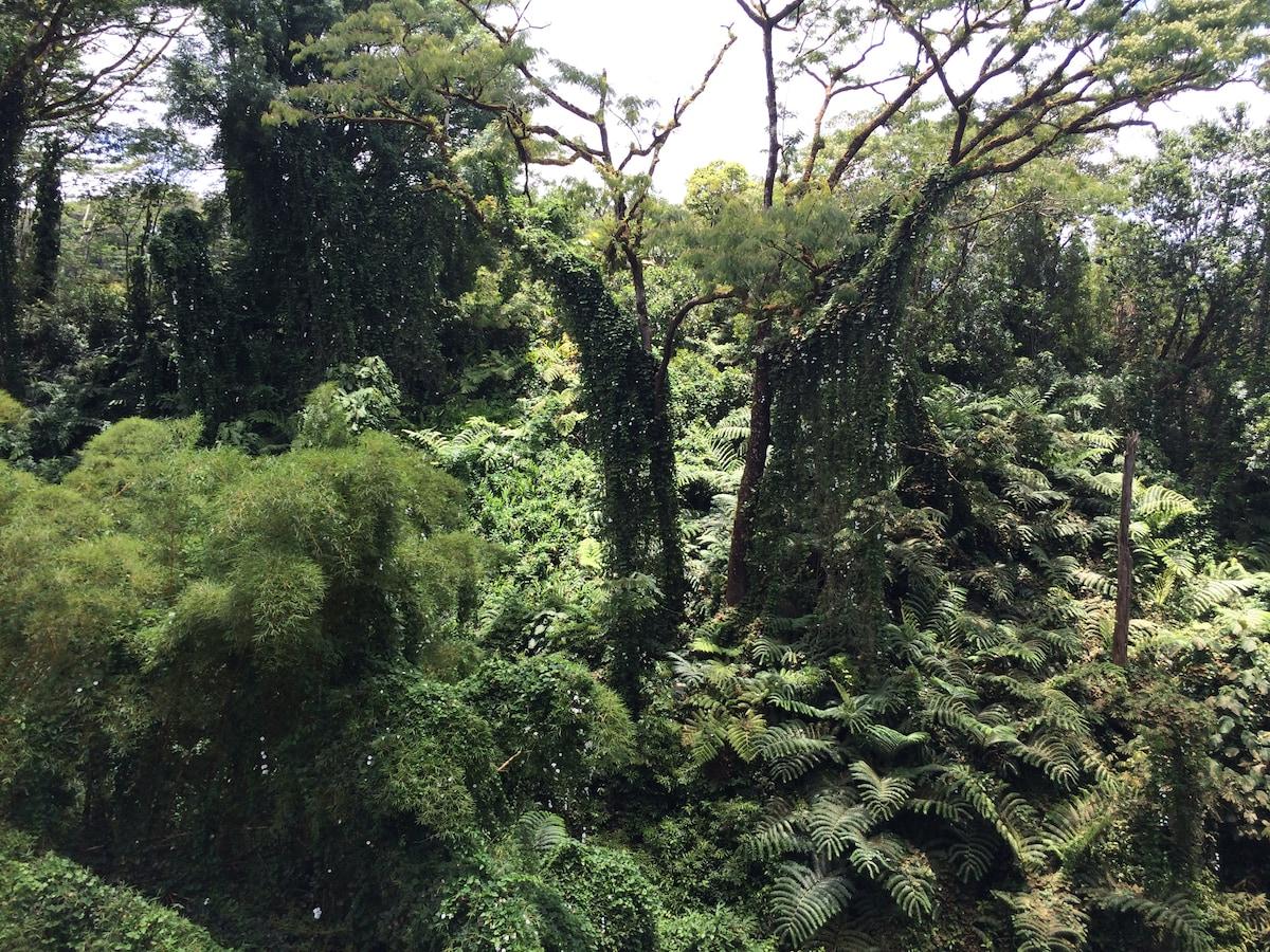 Isolated Jungle Peace Hut