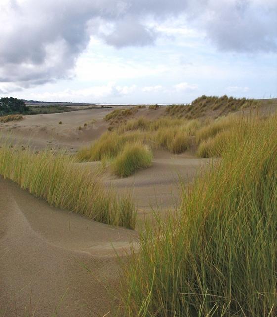 close to beautiful dunes & beach beyond