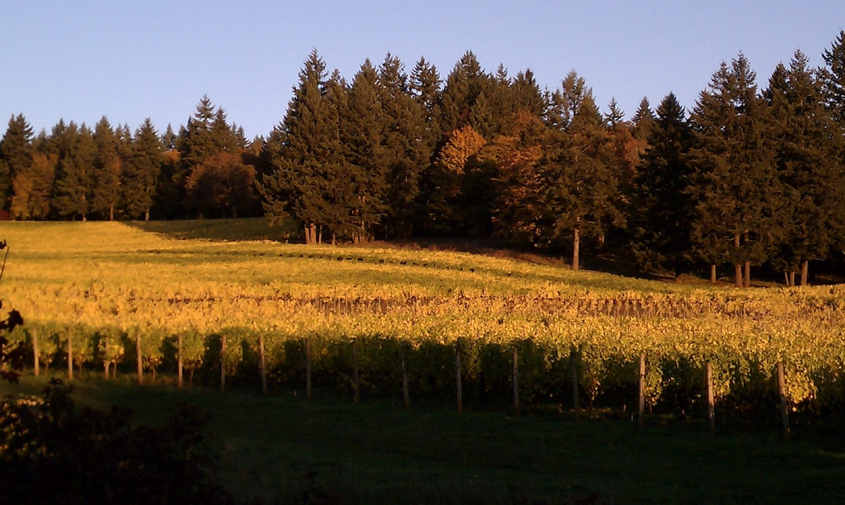 Vineyard cloaked in autumn gold.