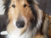 I live with my husband and our dog (a rough collie