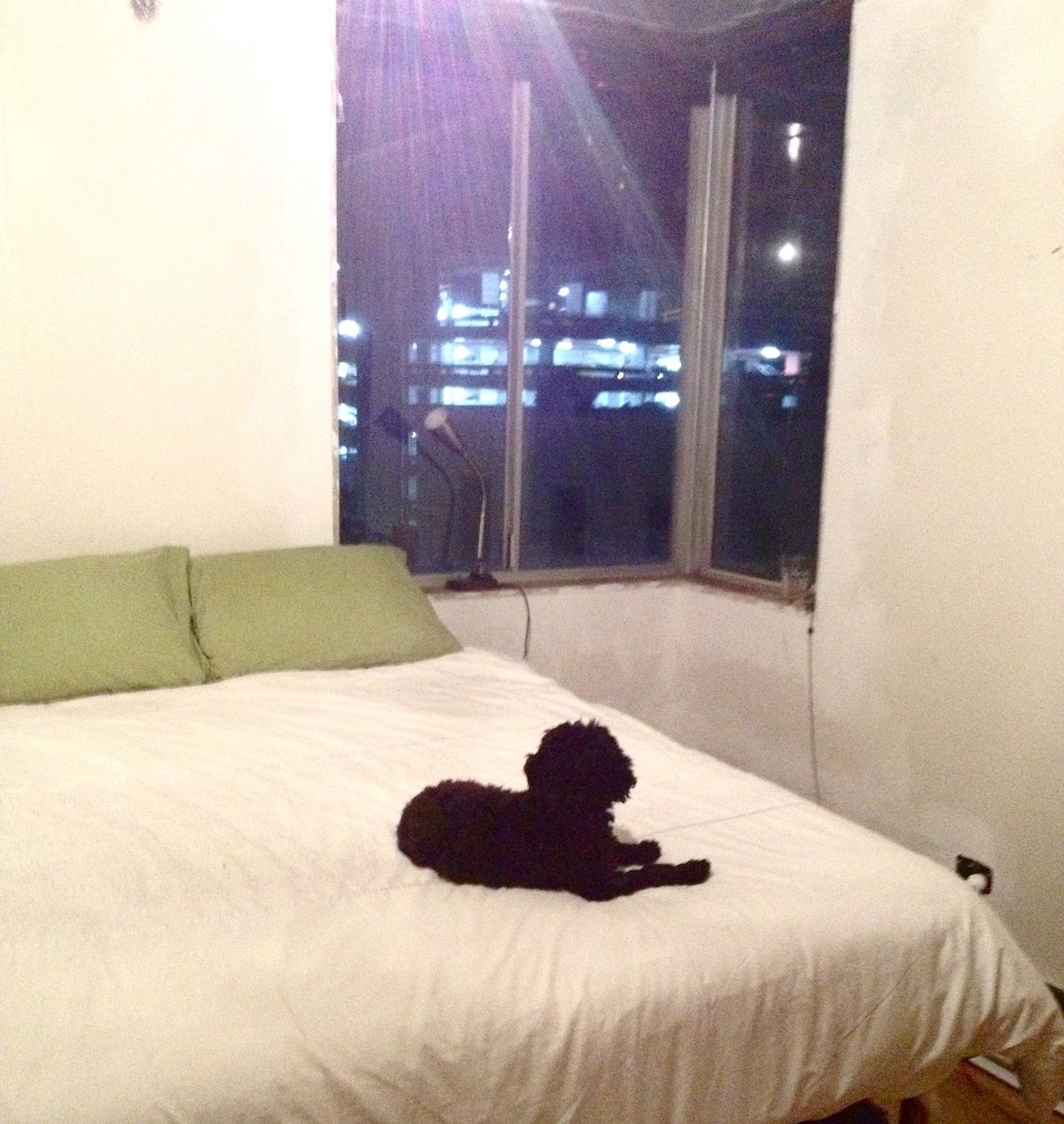 Our puppy Charlie likes the evening view :)