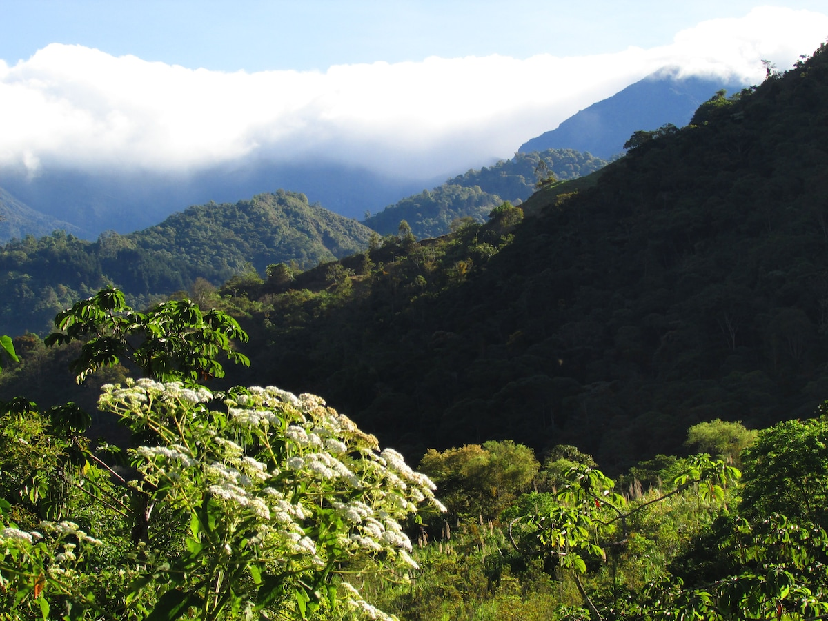 Breathtaking views from the terrace of mountain peaks, rolling pastures and primary rainforest...