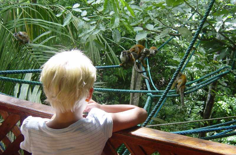 Endangered squirrel monkeys regularly visit our villa