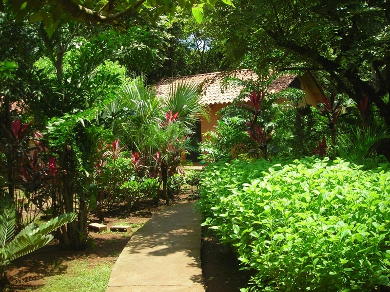 The view fron cabin 2 into the courtyard. Lush and green.