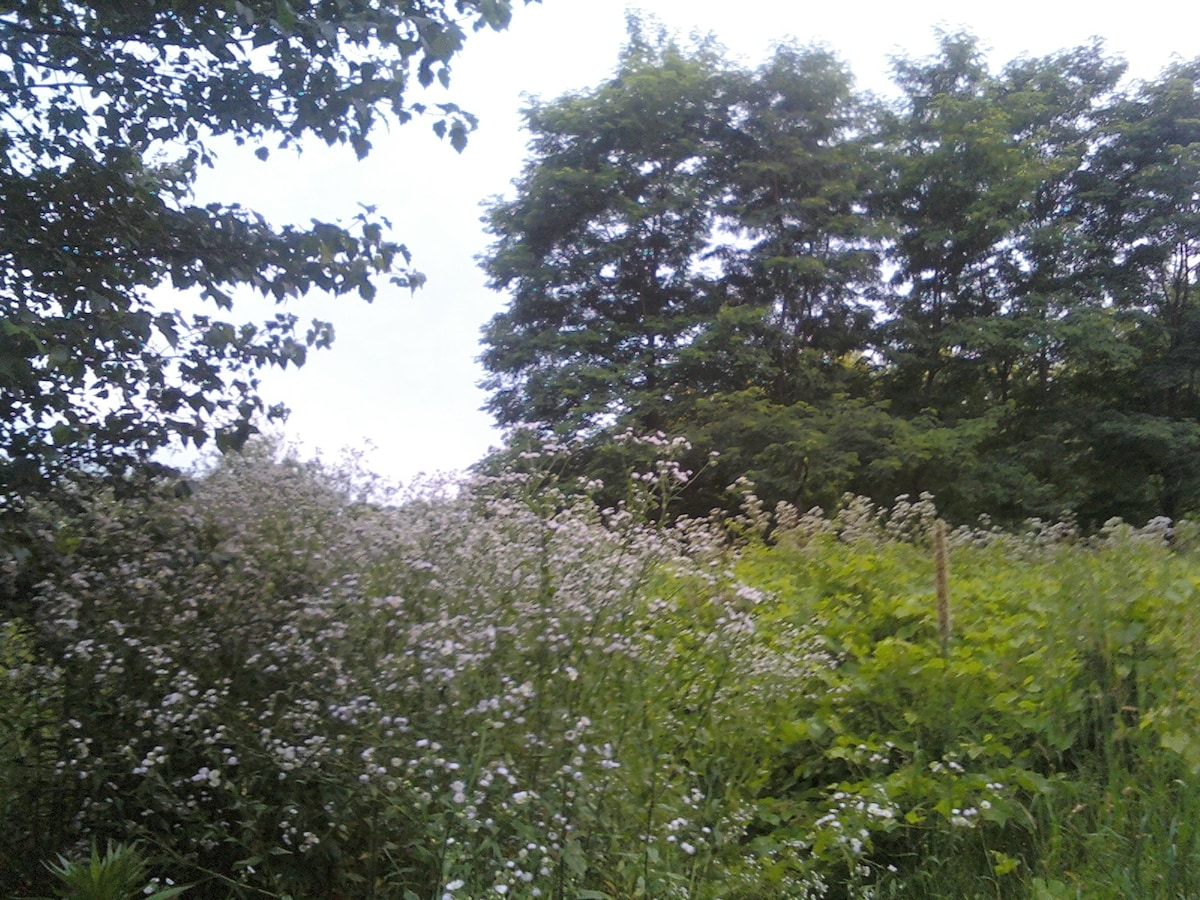 Looking South from top of hill. In front of house.  Valarian flowers foreground. Locust trees behind.