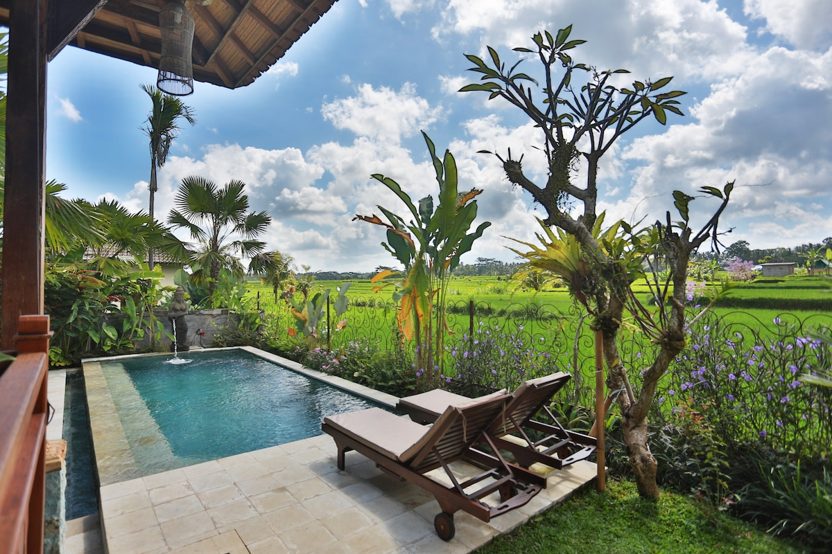 POOL AREA AT BALI UBUD VILLA, OVERLOOKING RICE FIELDS, TAKEN FROM OUTDOOR LIVING AREA