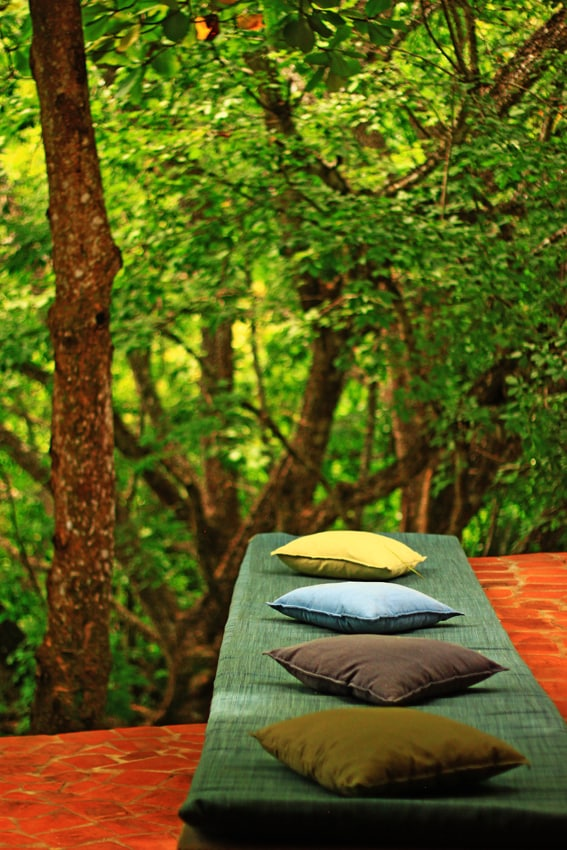 From the terraces, forest at your fingertips!