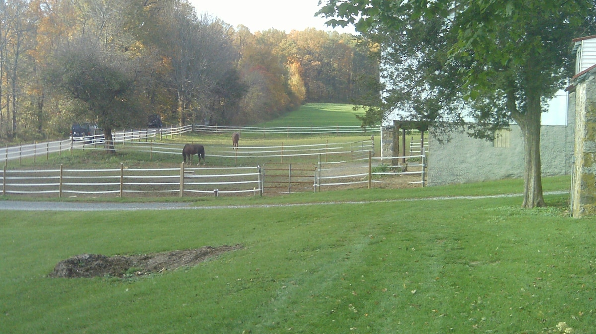 View from the porch, horses grazing in the pasture.