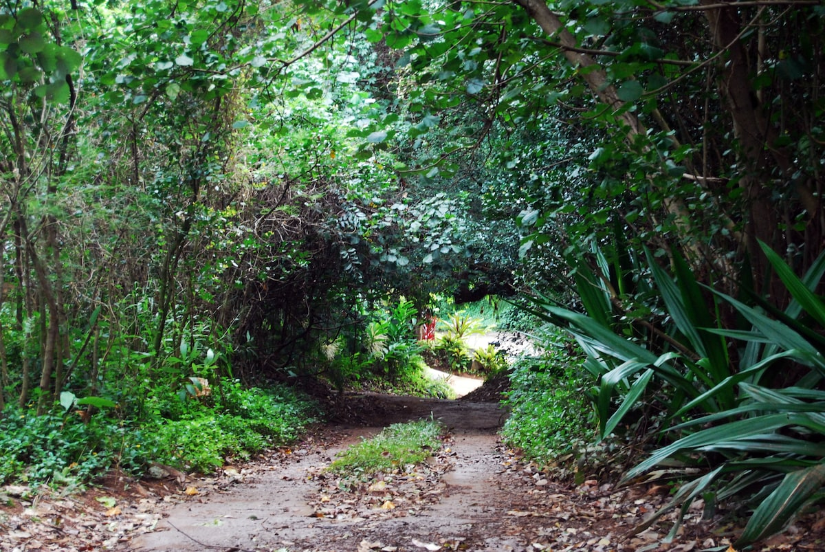 Tropical Jungle Cabin/ treehouse