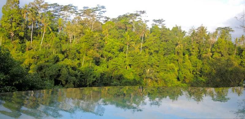 A view into the forest on the far bank of the river, over the infinity pool