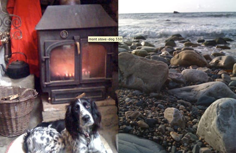 We are dog and seal friendly!