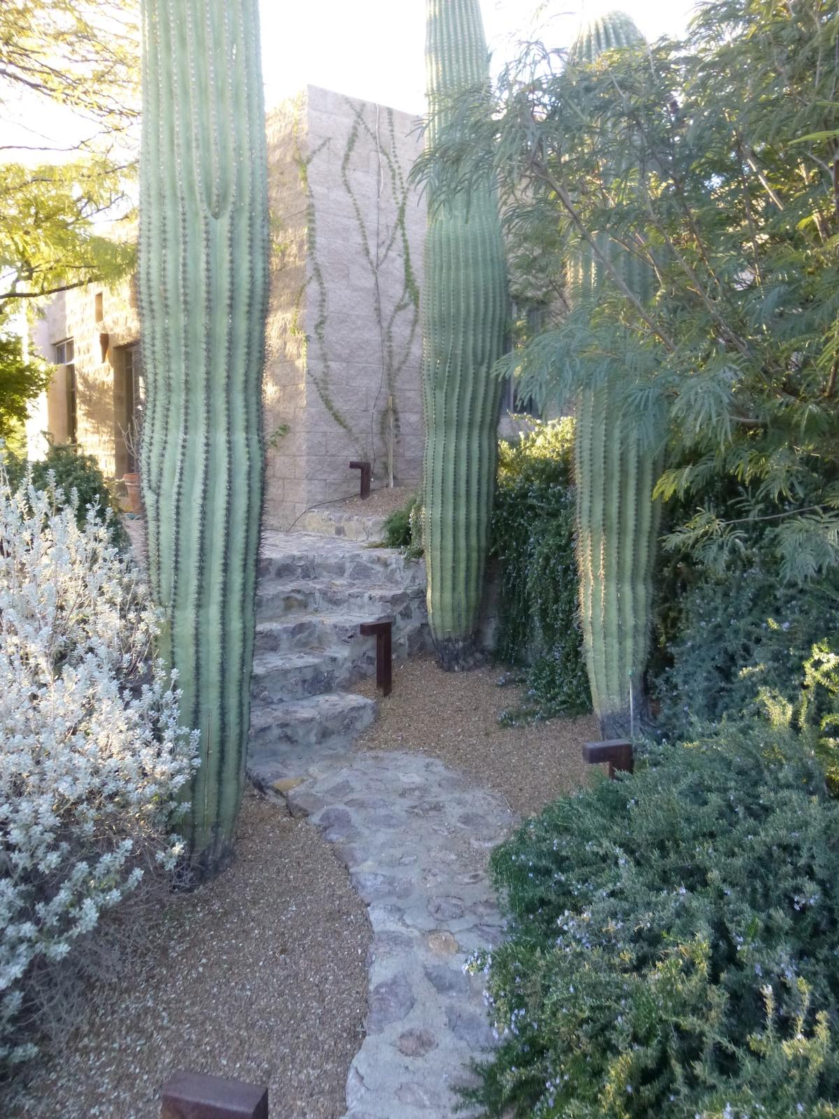 Entrance through the Saguaros