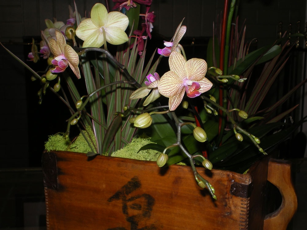 Home filled with hostess' private orchid collection.