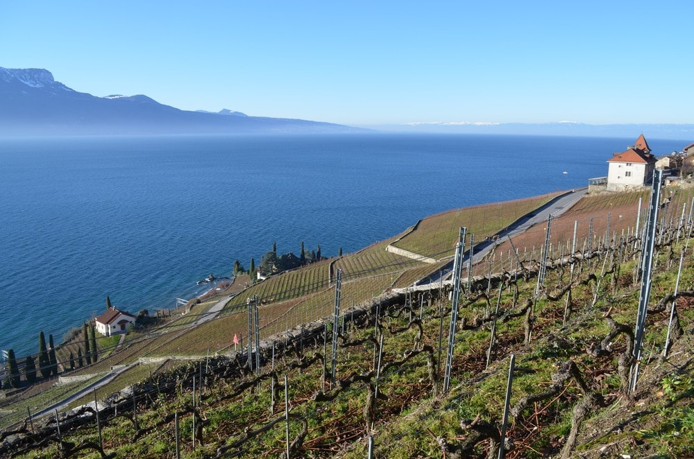 The wine resort is composed of several buildings (on the right) and has 6 hectares of vineyards.