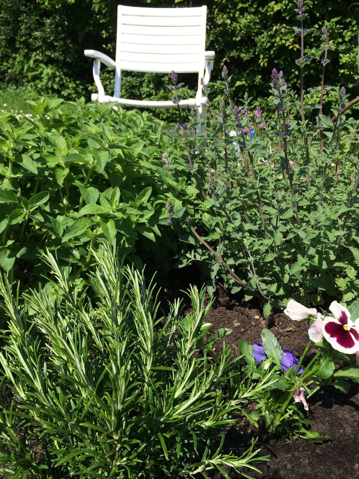 This May-weekend we prepared the beds with Rosemary, Thyme, Merian and Lavas for your dinners!