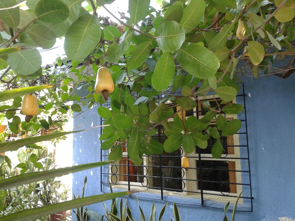 Shade from cashew tree - sombra del marañón