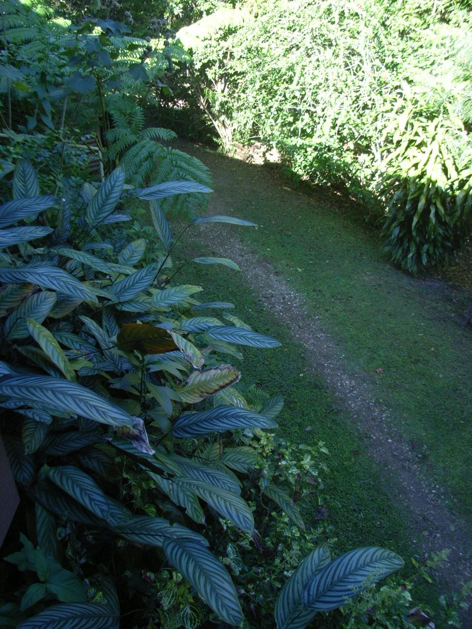 View from guests  BnB  balcony- wander the paths thru our mini rain forest...