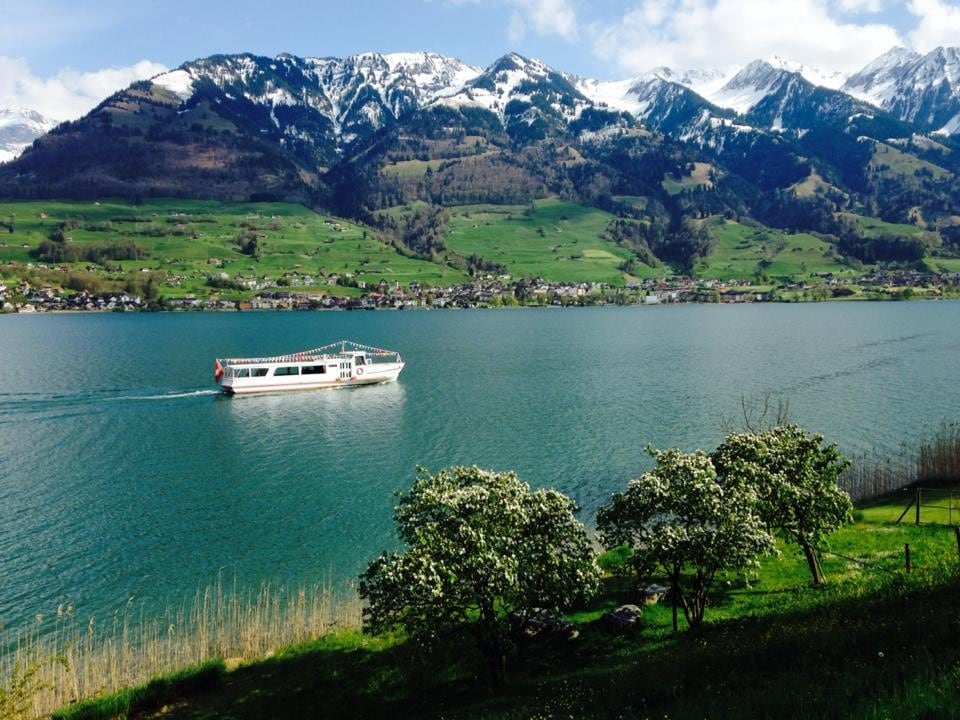 """Early Spring - showing Quince trees, snowy mountains and the """"Lakestar""""..."""