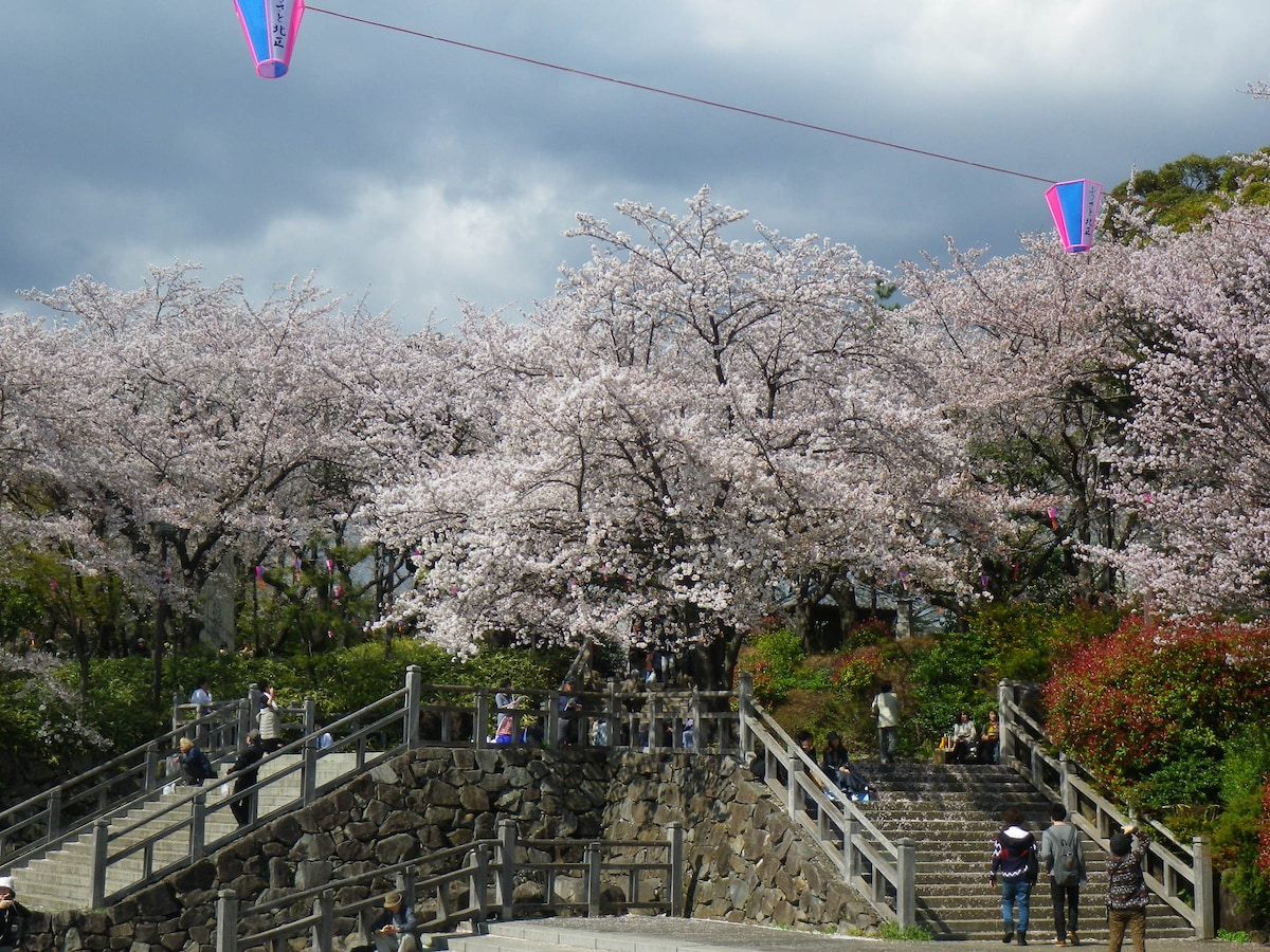 My local park boasts terrific cherry blossom viewing, playground, three museums, splash ponds in summer, many festivals, and great train spotting on the east side!  ASUKAYAMA PARK