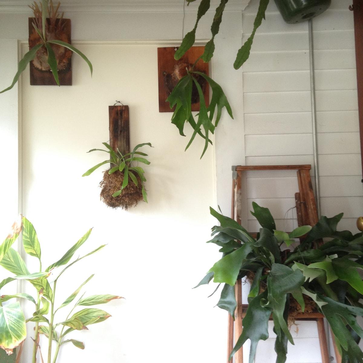 Bright Plant Filled Studio