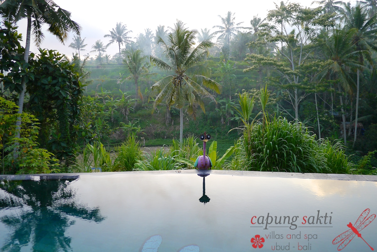 Infinity swimming pool, 180 degrees overlooking the rice fields.