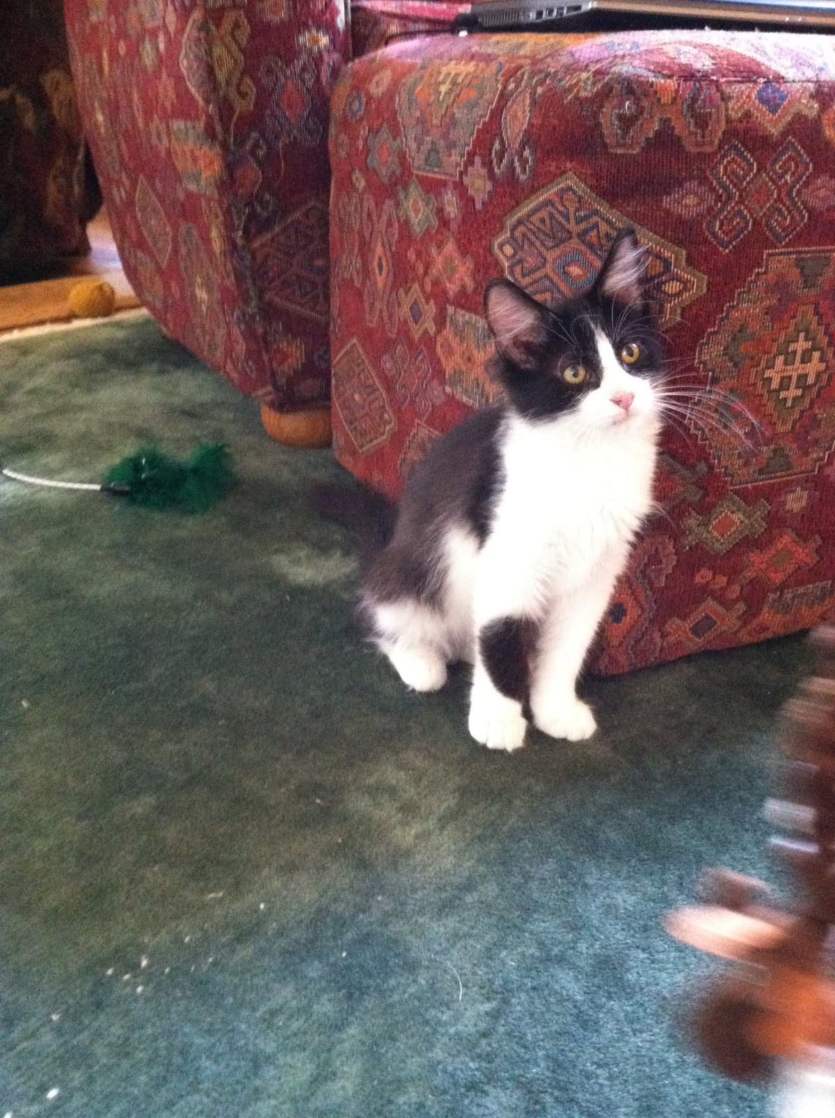 Oreo, our kitten ! (This is our first photo to let guests know we have cats , 2