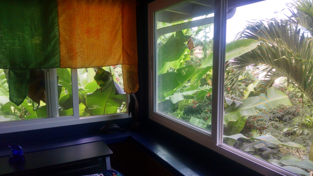 Your room and view from windows of jungle.