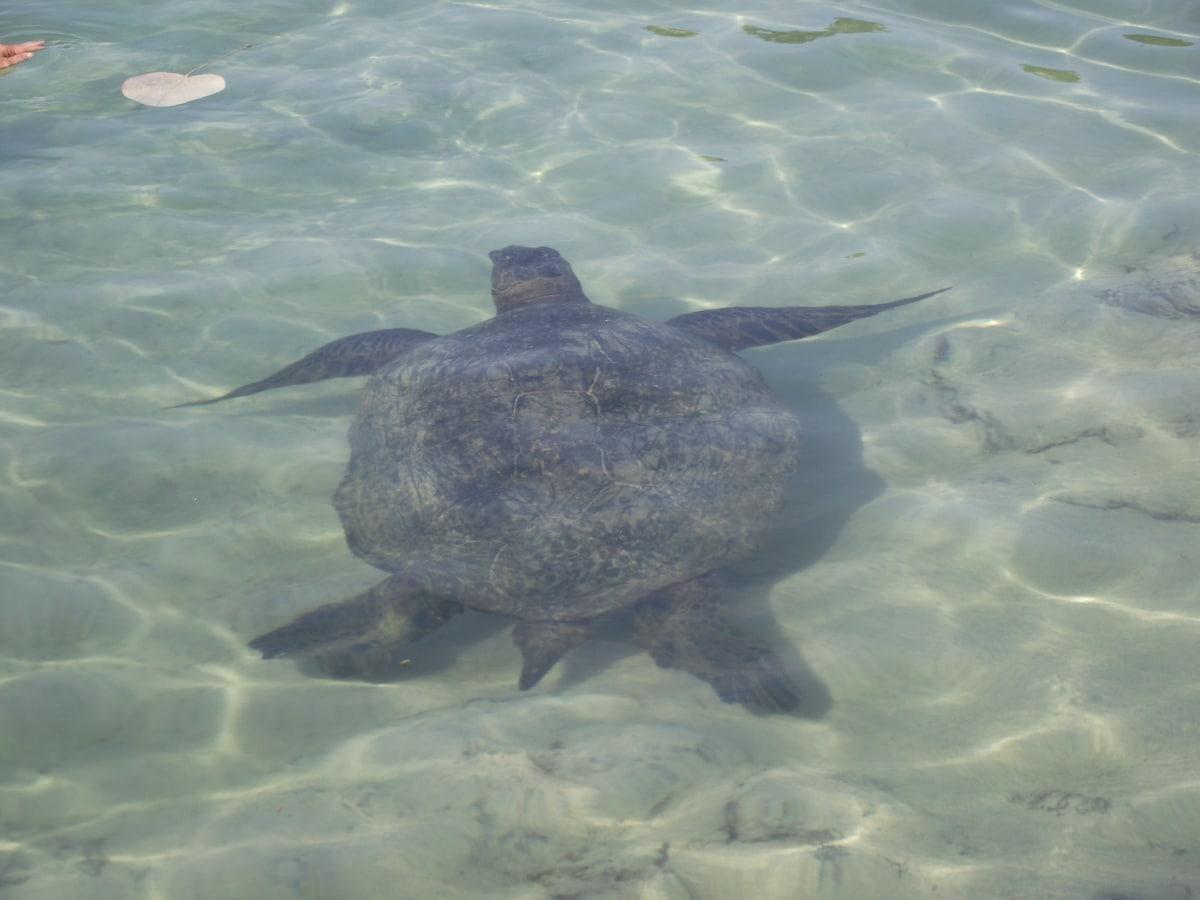 Oceanfront! Swim with sea turtles!