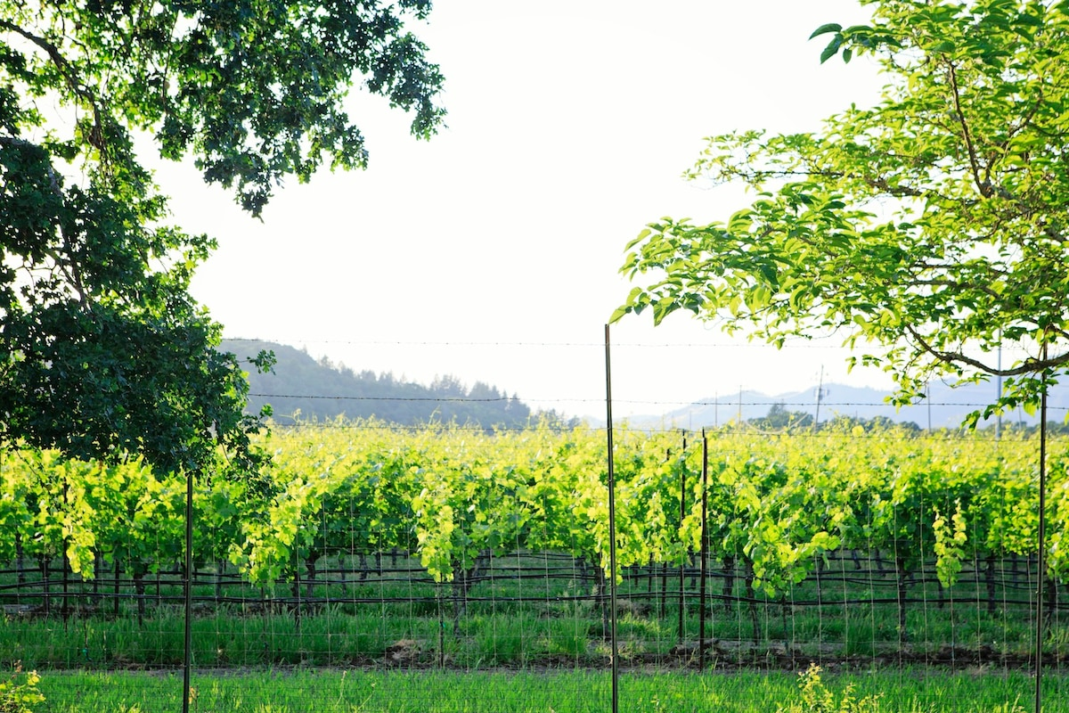 Welcome to Wine Country. Vineyard and mountain views from the property
