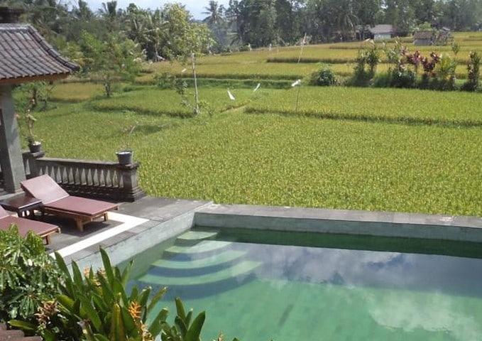 Fan Room @Ala's Green Lagoon Ubud 1