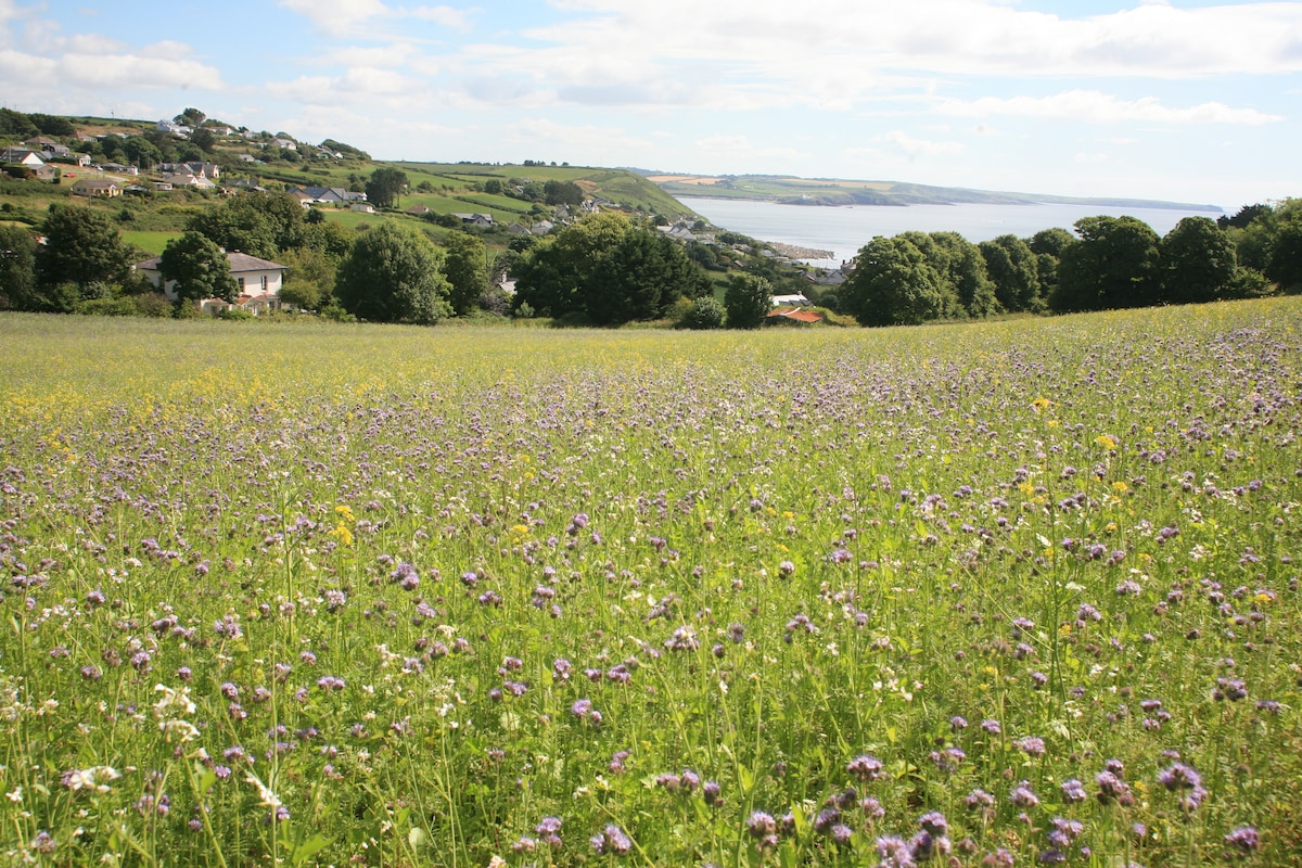 From the Bee Meadow to the sea:)
