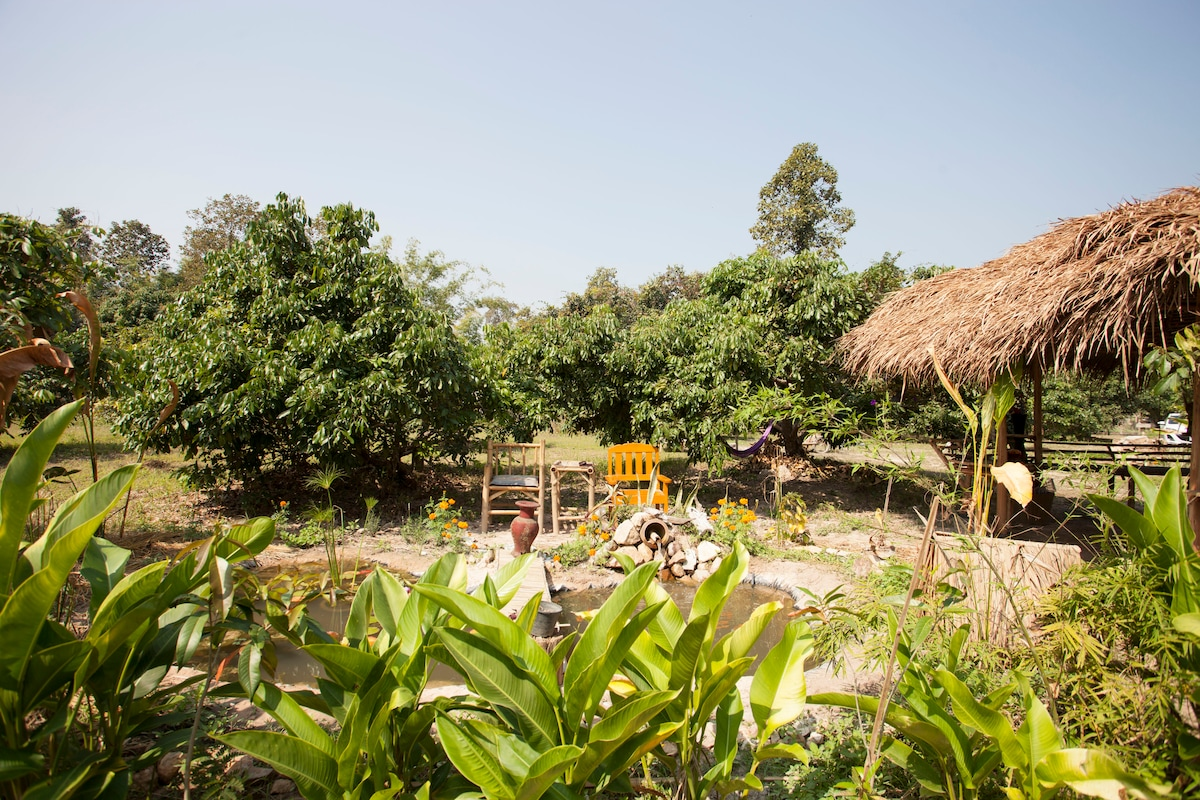 The land is lush green with variety of fruit tree, veggie bed, and lots of recreational area.