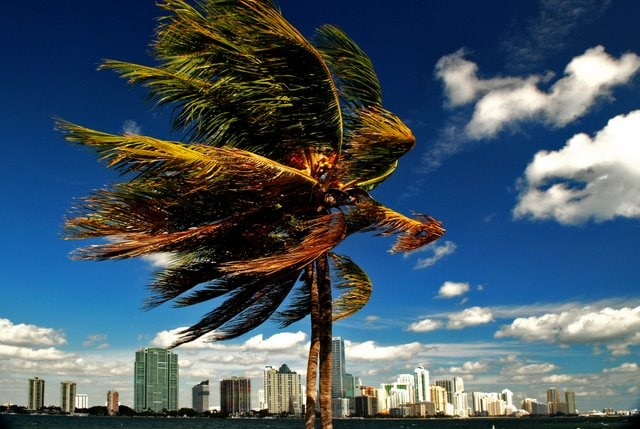 Affordable Miami Studio
