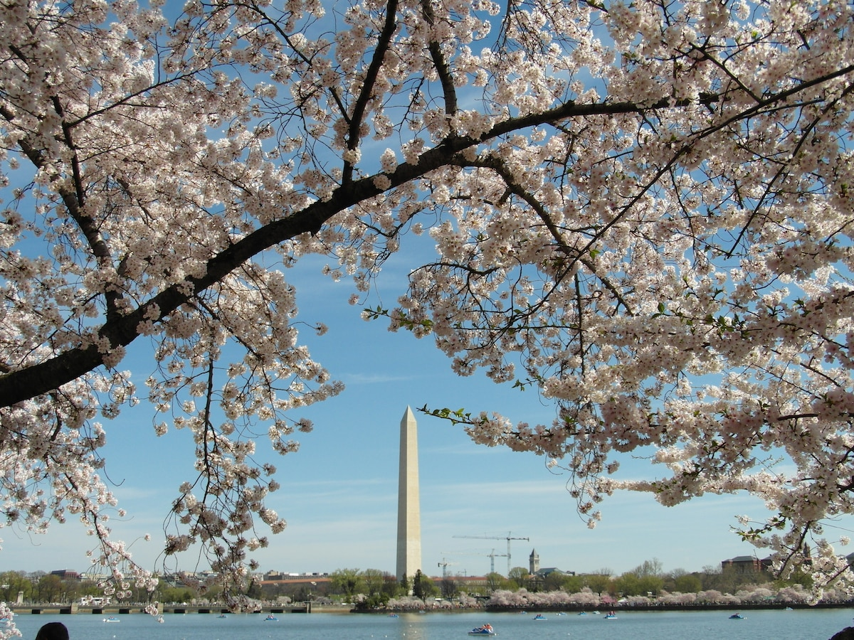 Washington Monument Cherry Blossom Festival 2014