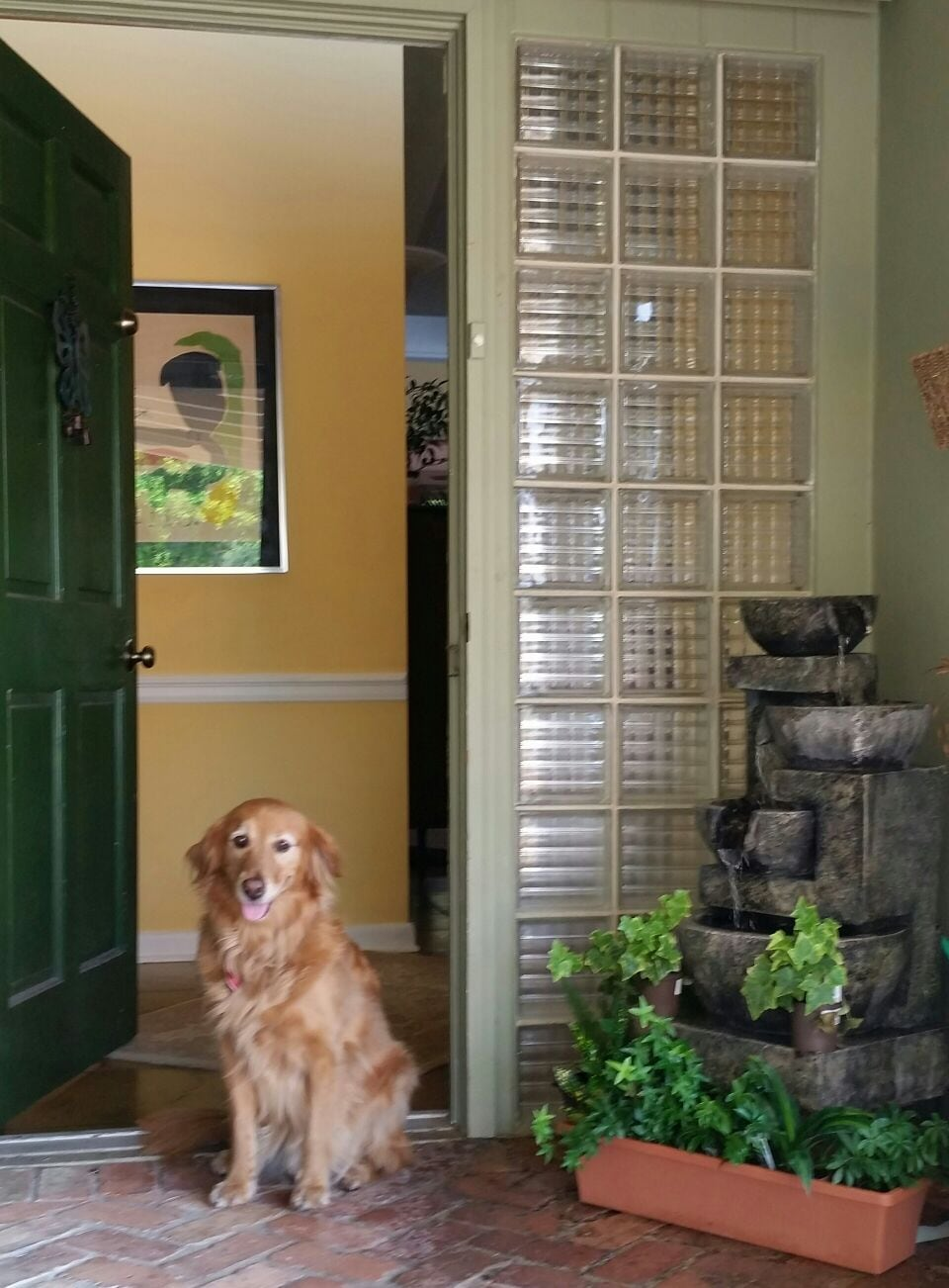 Ananda, my Golden is eager to greet you!