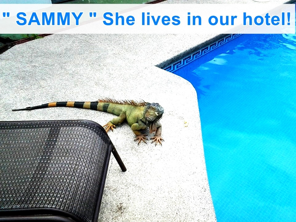 "We called ""SAMMY"" She lives in the river, behind our hotel, and sometimes come to eat some fruits by the pool.  SEE YOU SOON!!"
