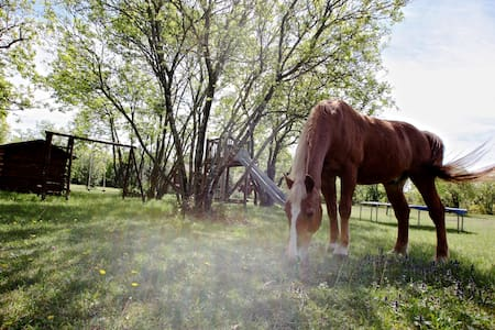 New Ranch (with 3 horses) 20 min. from Trieste - Štorje