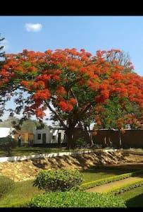 Sheila's lodge - Lilongwe - Bed & Breakfast